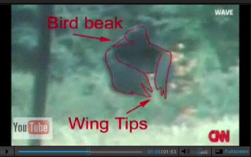 Bigfoot Bird