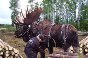 moose harness hoax