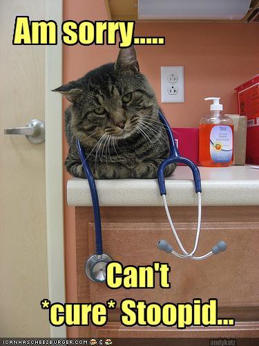 Stupid Cat Memes Funny
